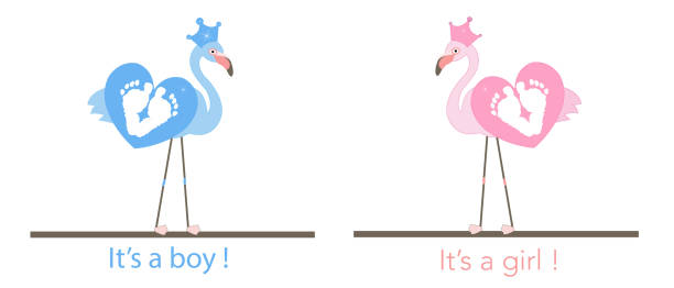 Gender Reveal Illustrations Royalty Free Vector Graphics