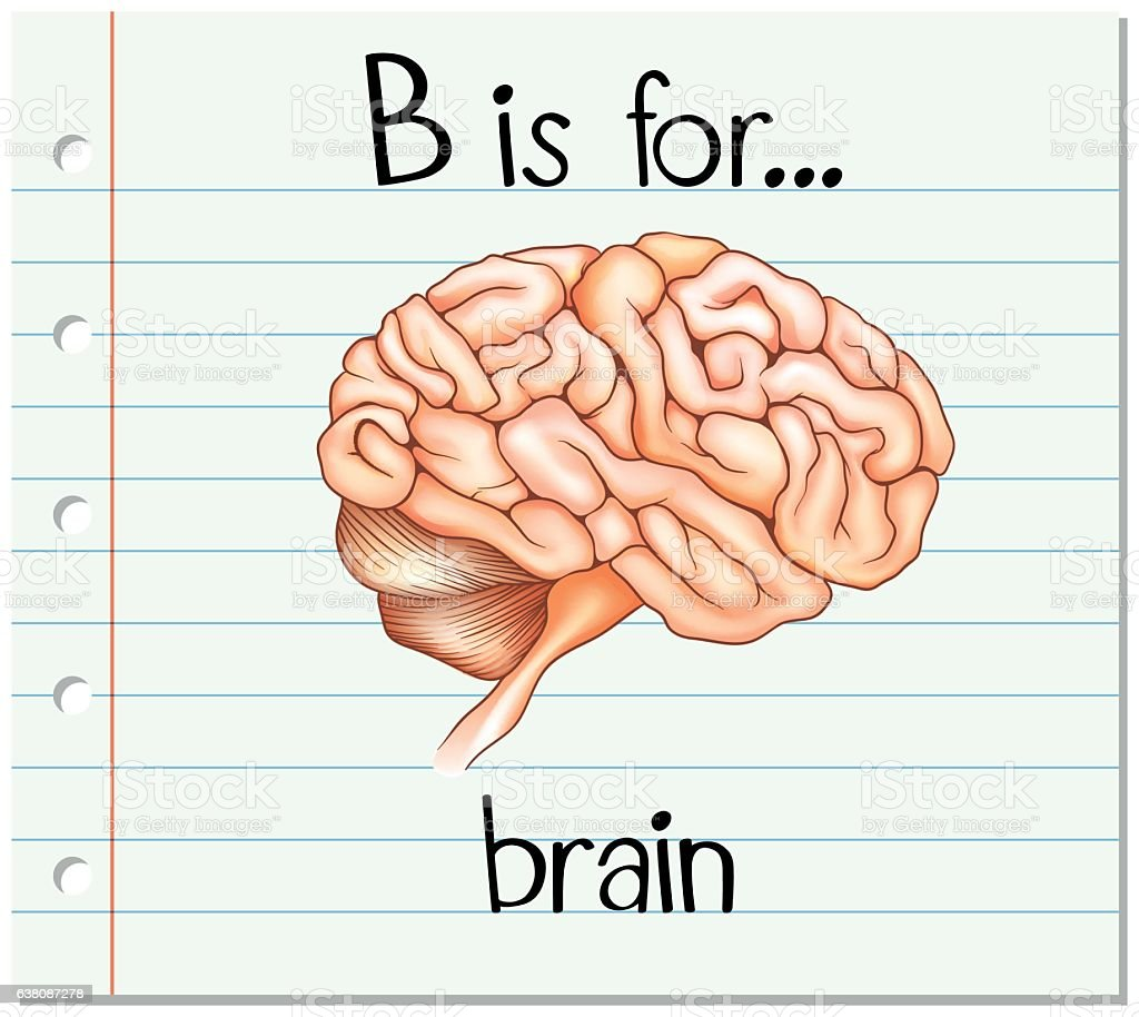 Flashcard Alphabet B Is For Brain Stock Vector Art More Images Of