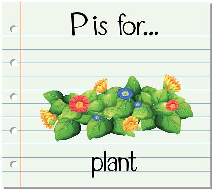 Flashcard alphabet P is flor plant