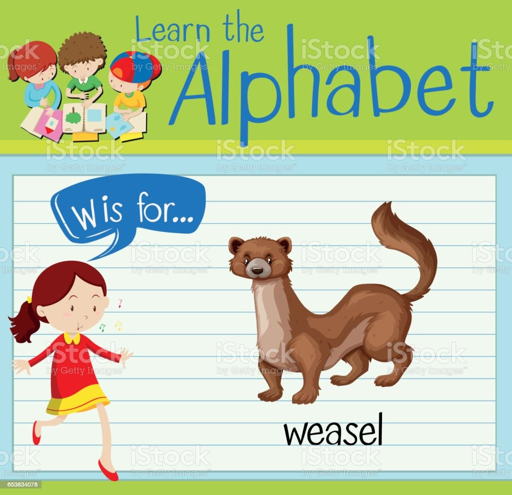 Flashcard alphabet W is for weasel - Illustration vectorielle