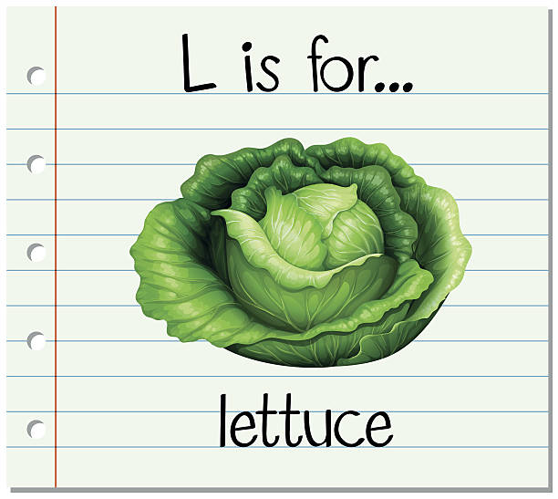 flashcard letter l is for lettuce - lettuce stock illustrations