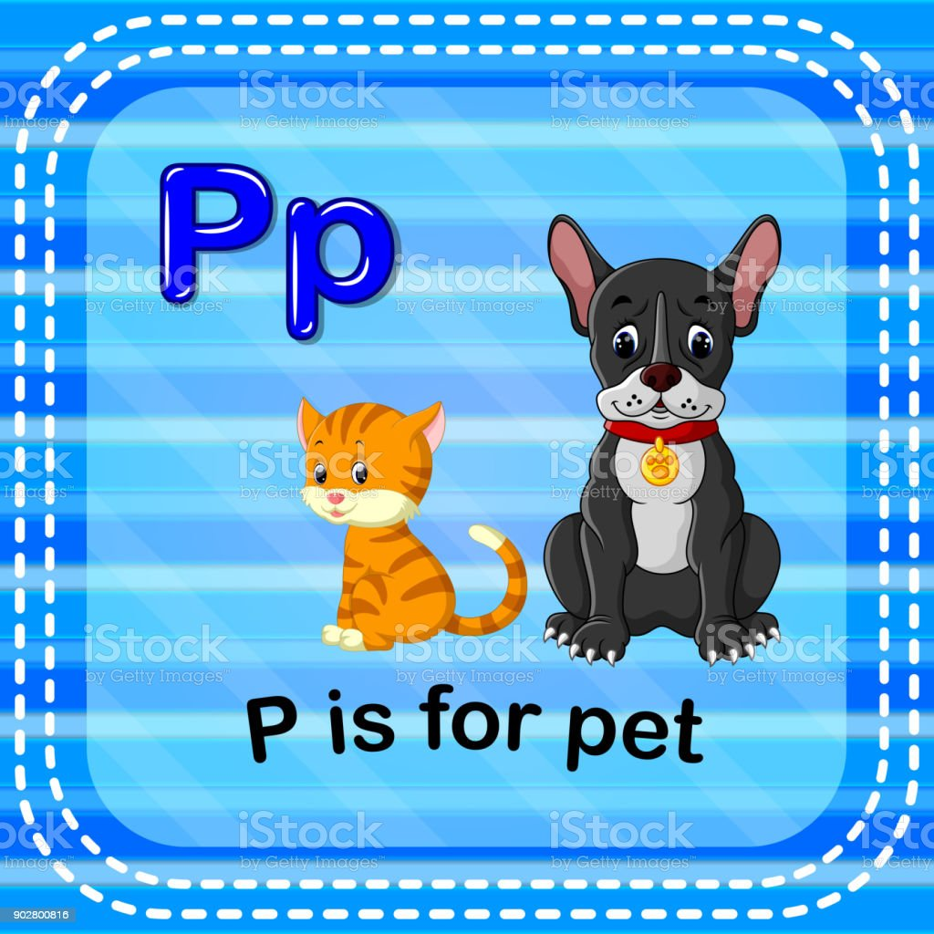 Flashcard letter P is for pet vector art illustration