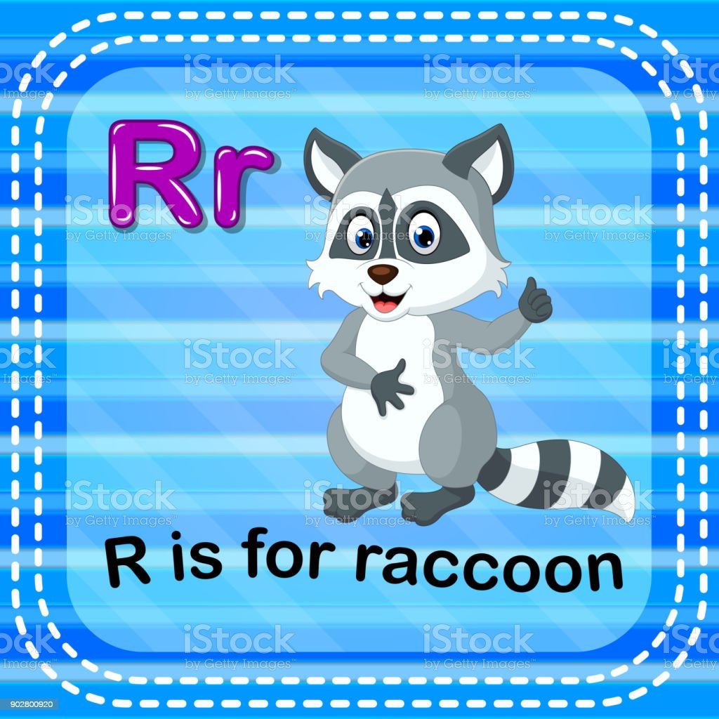 Flashcard letter R is for raccoon vector art illustration
