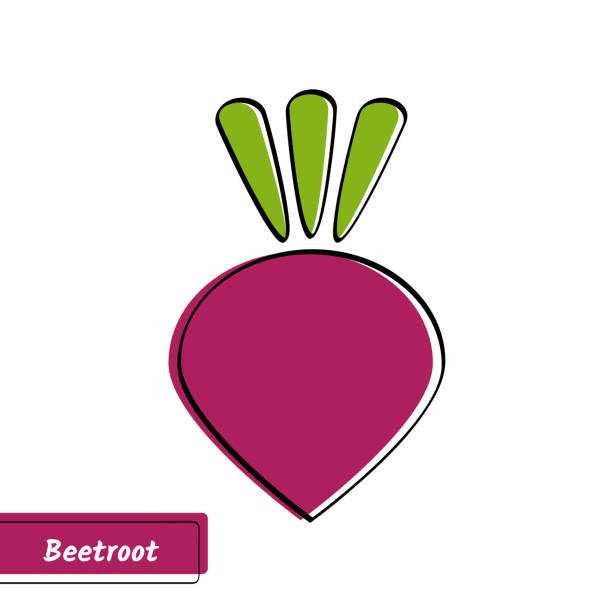 Flat beetroot education card with black contour vector art illustration