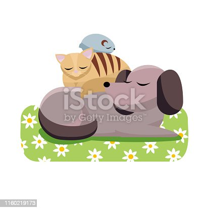 Flat cartoon vector illustration cat and chinchilla sleeps comfortably on dog. Sweet dreams of furry friends. Cute best friends sleeping dog, cat, hamster on daisy dog mat on white background
