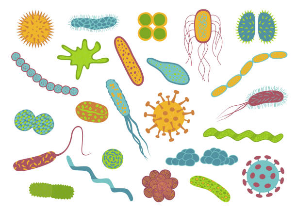Flat design germs and bacteria icons set  isolated on white background. Flat design germs and bacteria icons set  isolated on white background.  Shape of bacterial cell: cocci, bacilli, spirilla.  Vector  illustration. bacterium stock illustrations