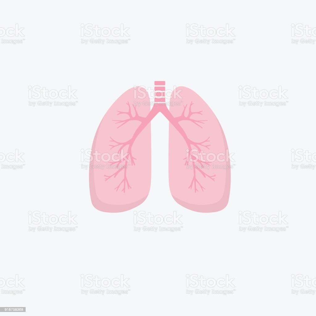 Flat design human lungs icon. Human internal organ. Anatomy concept. Respiratory system. Healthcare vector art illustration