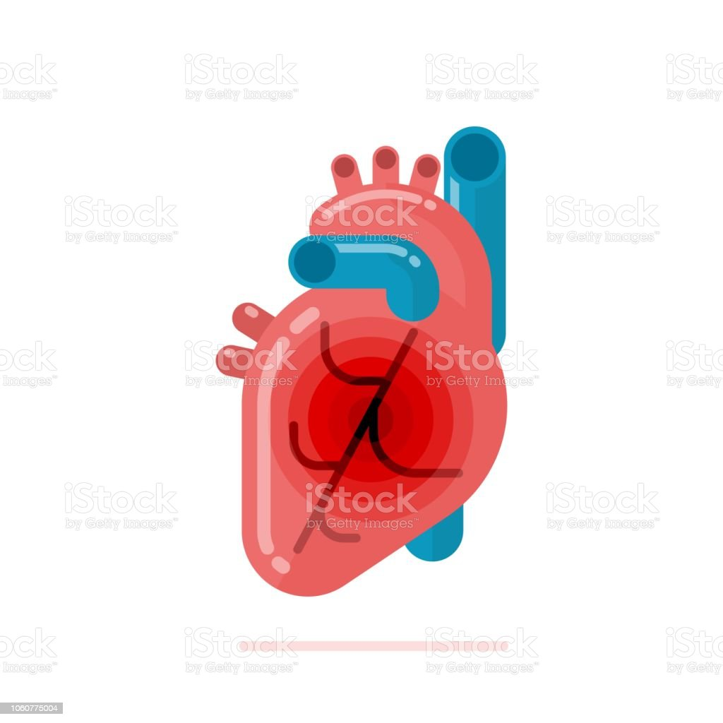 Flat design illustration of healthy human heart vector art illustration