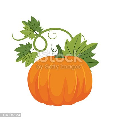 Autumn pumpkin on a white background