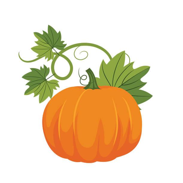 Flat Design Pumpkin Autumn pumpkin on a white background autumn clipart stock illustrations