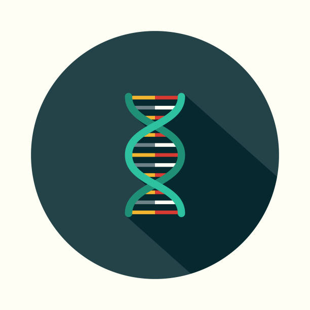 DNA Flat Design Science & Technology Icon with Side Shadow A flat design styled communication icon with a long side shadow. Color swatches are global so it's easy to edit and change the colors. helix model stock illustrations