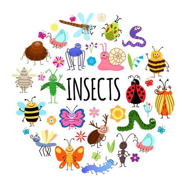 Flat Funny Insects Round Concept Flat funny insects round concept with spider worm grasshopper mosquito wasp beetles snail ant ladybug dragonfly caterpillar bee flowers isolated vector illustration insects stock illustrations