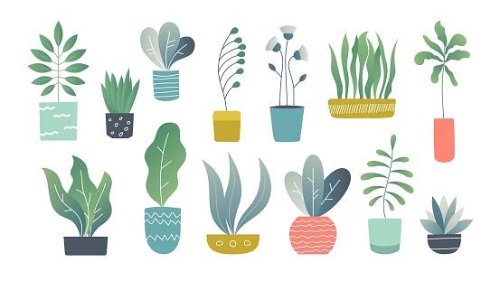 Flat houseplants. Indoor doodle garden plants, cute interior succulents and house plants. Hand drawn vector home garden