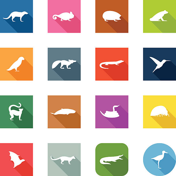 flache icons-vanille tiere - megabat stock-grafiken, -clipart, -cartoons und -symbole