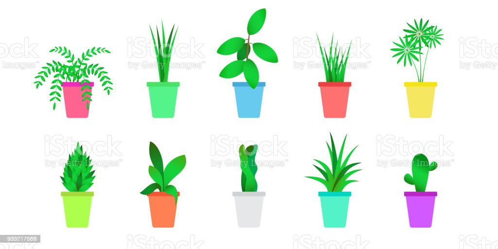 Indoor home office plants royalty Potted Plants Flat Indoor Plants Set Isolated Vector Of Home Flowers Royaltyfree Flat Indoor Procom Flat Indoor Plants Set Isolated Vector Of Home Flowers Stock Vector