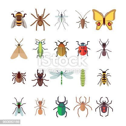 Flat insects icons set. Butterfly, dragonfly, spiders, ant isolated on white background. Vector insect ladybug and beetle, dragonfly and butterfly illustration