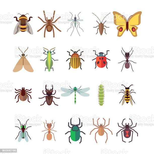 Flat insects icons set butterfly dragonfly spiders ant isolated on vector id950680186?b=1&k=6&m=950680186&s=612x612&h=dfkay5vdxu3bvvp8huh8osmxf6c9 wuarnetipalpty=