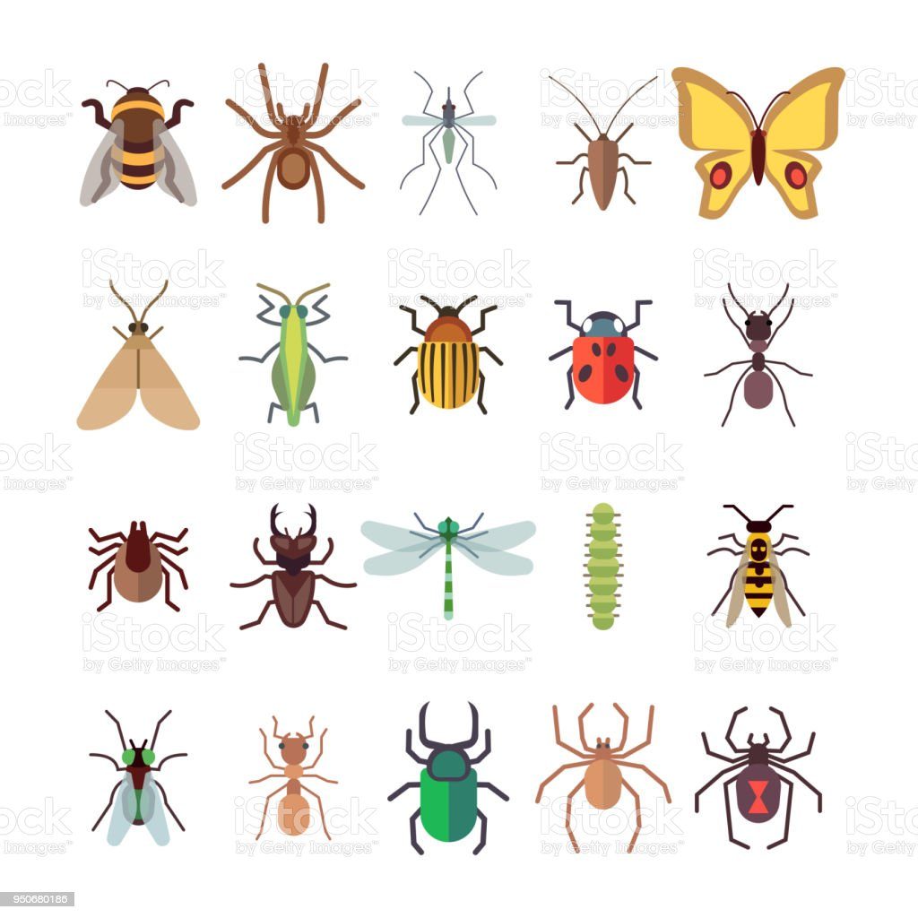 Flat insects icons set. Butterfly, dragonfly, spiders, ant isolated on white background vector art illustration