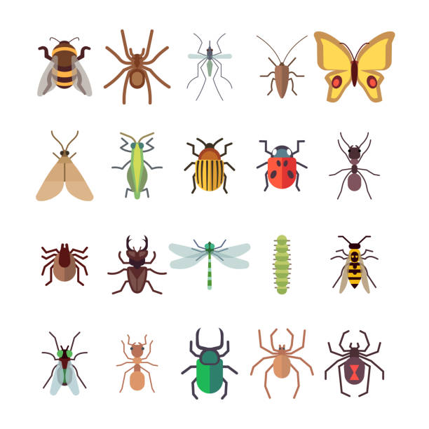 Flat insects icons set. Butterfly, dragonfly, spiders, ant isolated on white background Flat insects icons set. Butterfly, dragonfly, spiders, ant isolated on white background. Vector insect ladybug and beetle, dragonfly and butterfly illustration fly insect stock illustrations