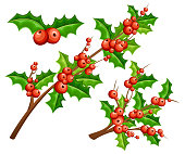 Flat mistletoe decorative. Branches with red berries green leaves. Christmas ornament. Vector illustration isolated on white background. Web site page and mobile app design