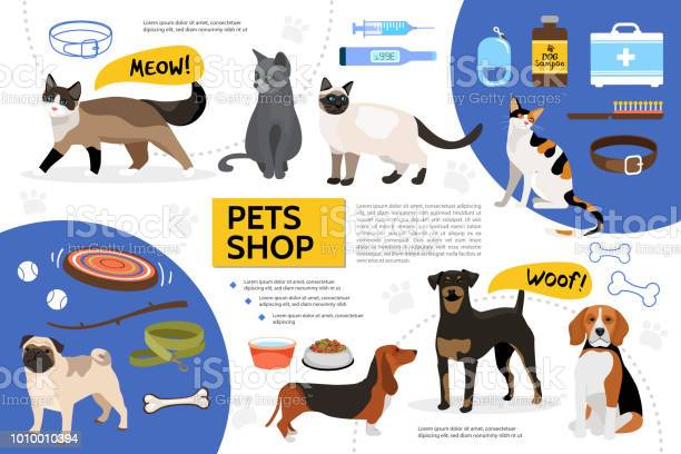 Flat pet shop infographic template vector id1010010394?b=1&k=6&m=1010010394&s=612x612&h= 5 pctvq gsxydomodul4 9ojus69 2cdslarm2nrnk=