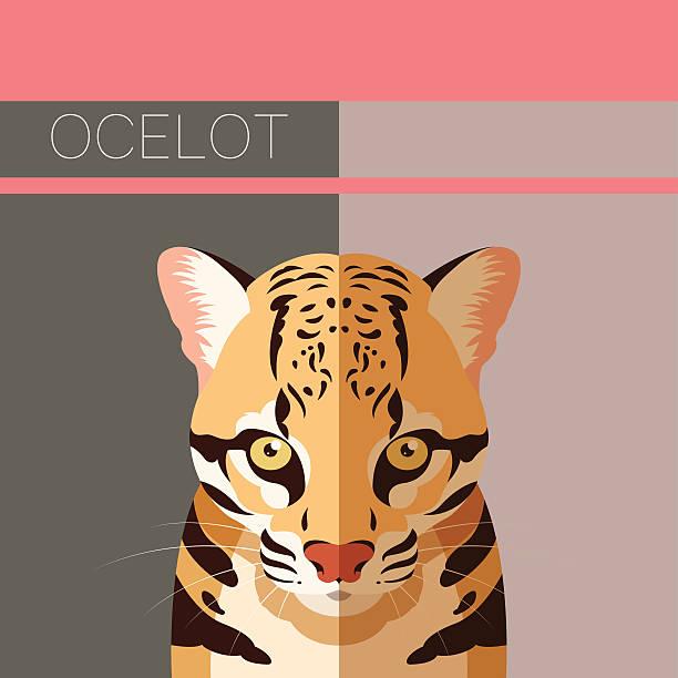 illustrazioni stock, clip art, cartoni animati e icone di tendenza di flat postcard with ocelot - ocelot