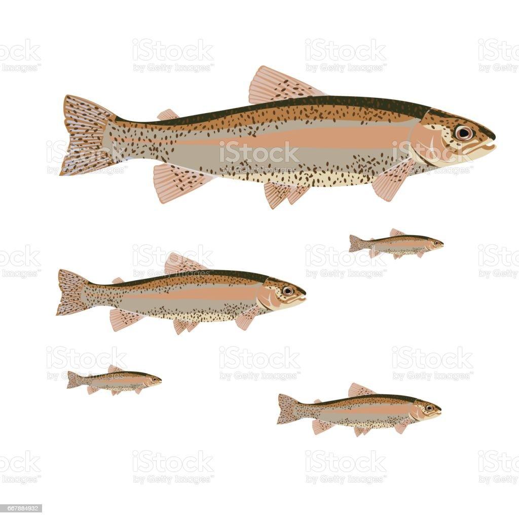flat set salmon vector art illustration