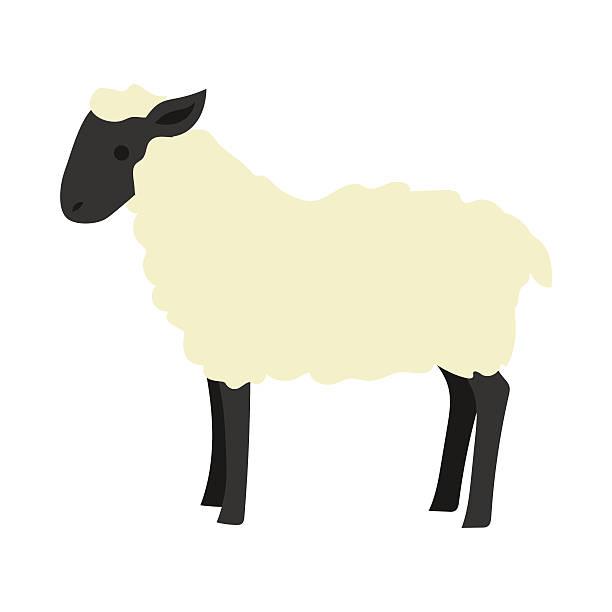 stockillustraties, clipart, cartoons en iconen met flat sheep illustration - schaap