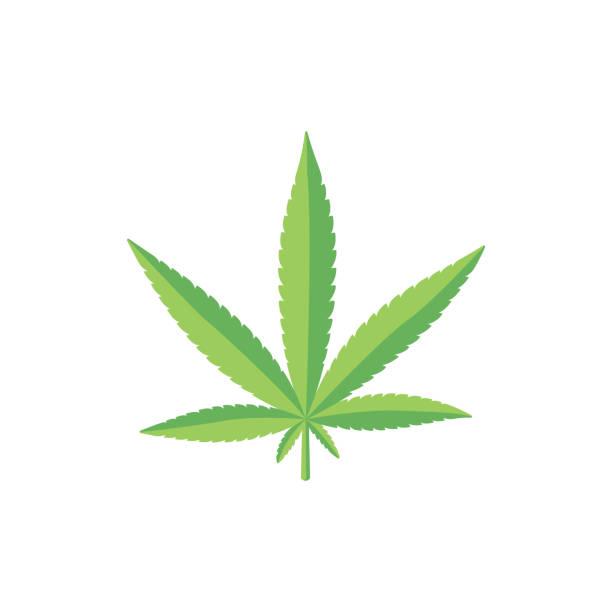 Flat style fresh green cannabis, marijuana leaf Fresh marijuana, hemp, cannabis leaf on two shades of green, flat style vector illustration isolated on white background. Flat style fresh green cannabis, marijuana leaf marijuana stock illustrations