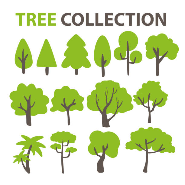 ilustraciones, imágenes clip art, dibujos animados e iconos de stock de colección de árboles planos para decorar el fondo de un árbol de dibujos animados - árbol