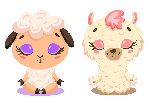 Flat vector illustration of cute cartoon sheep and llama meditation. Farm animals yoga.