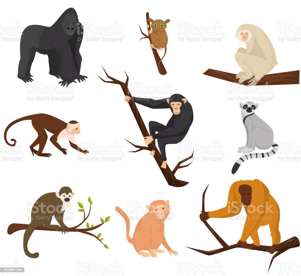 Flat Vector Set Of 9 Species Of Monkeys Wild Animals Elements For ...