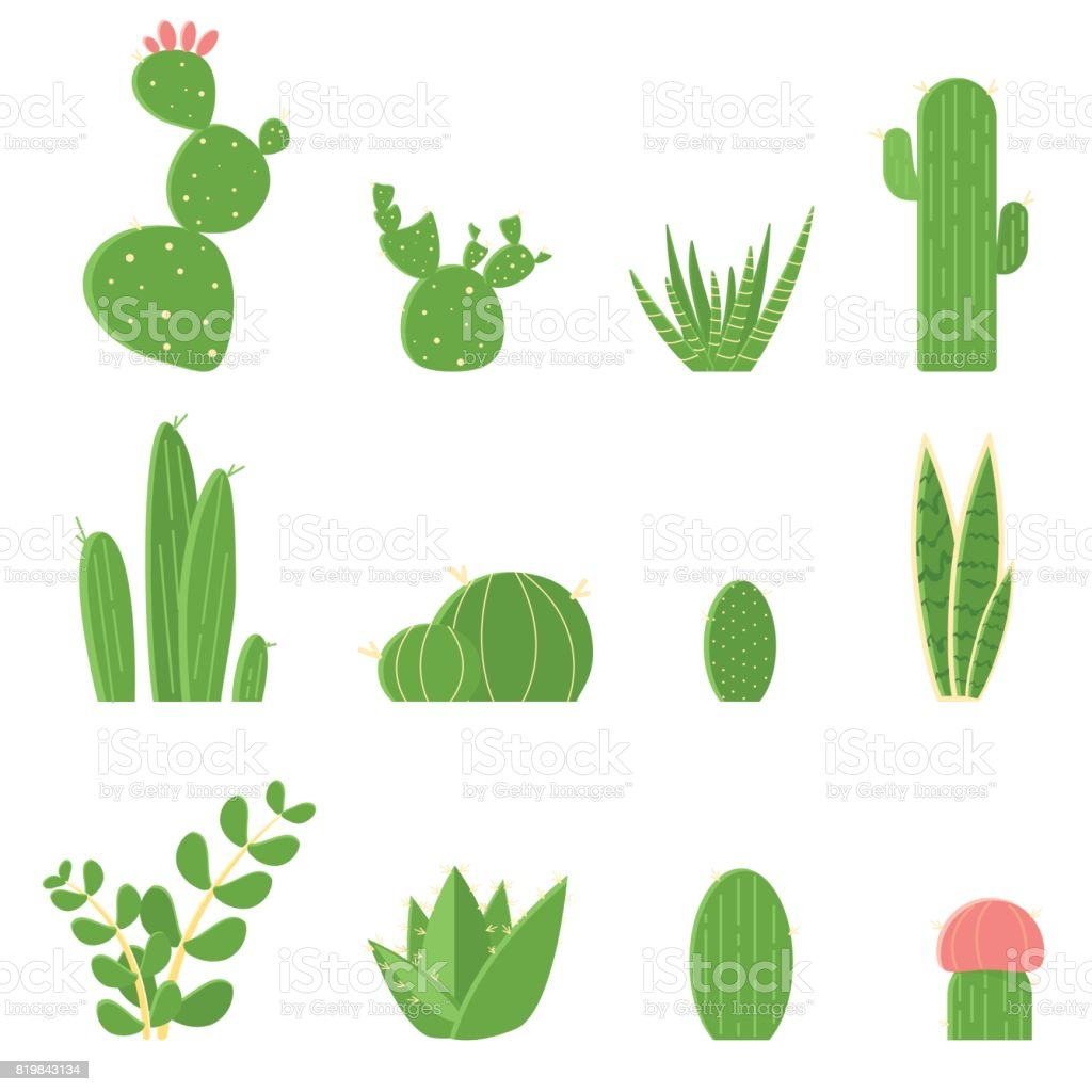 Flat vector set of cacti and succulents. Cartoon illustration of cactus isolated on white background. vector art illustration