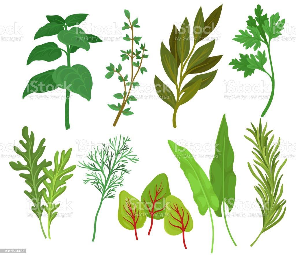 Set De Vector Plat Dherbes Differentes Plantes Aromatiques