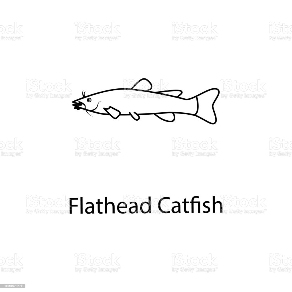 Flathead Catfish Icon Element Of Marine Life For Mobile Concept And