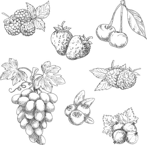 Flavorful fresh garden fruits with leaves sketches vector art illustration