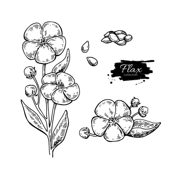 76 Blue Flax Illustrations Royalty Free Vector Graphics Clip Art Istock