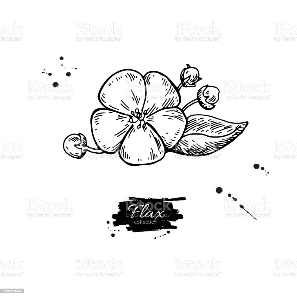 Flax flower vector superfood drawing. Isolated hand drawn  illus vector art illustration