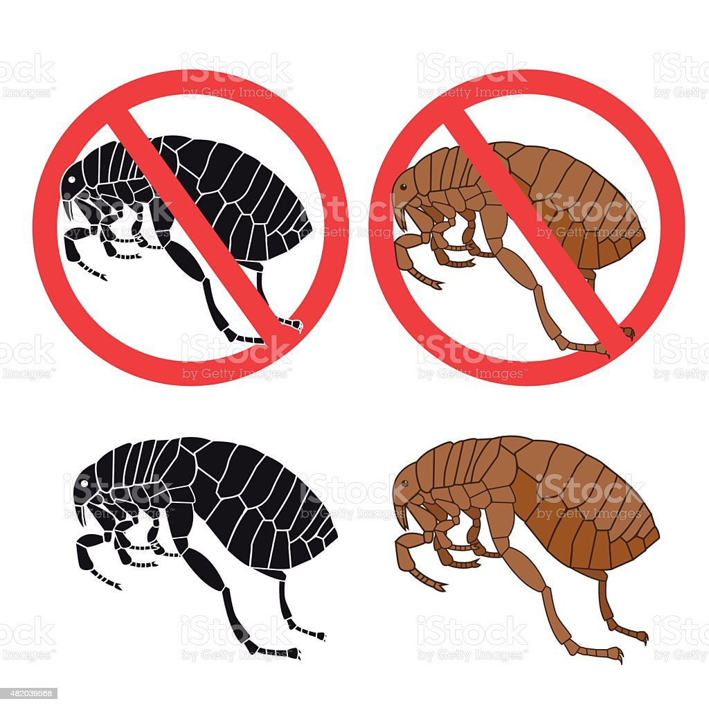 Flea Signs. Danger Sign. Flea And Hygiene. vector art illustration