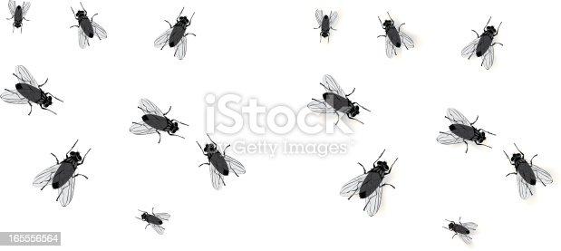 istock Flies 165556564