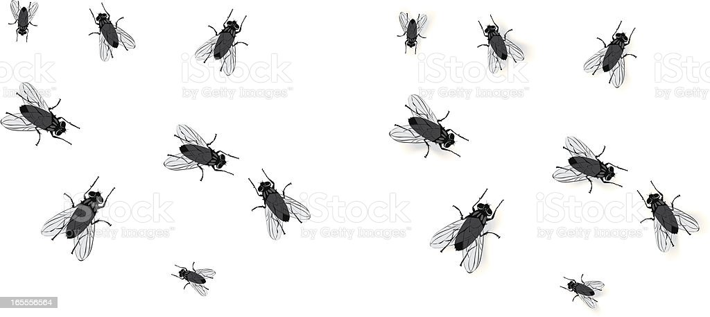 Flies vector art illustration