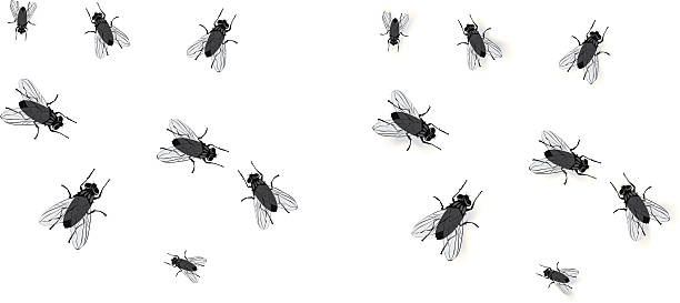 Flies Flies with and without drop shadows. On layers for easy editing. fly insect stock illustrations