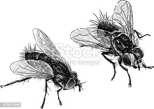 Vector image of the big houseflies.