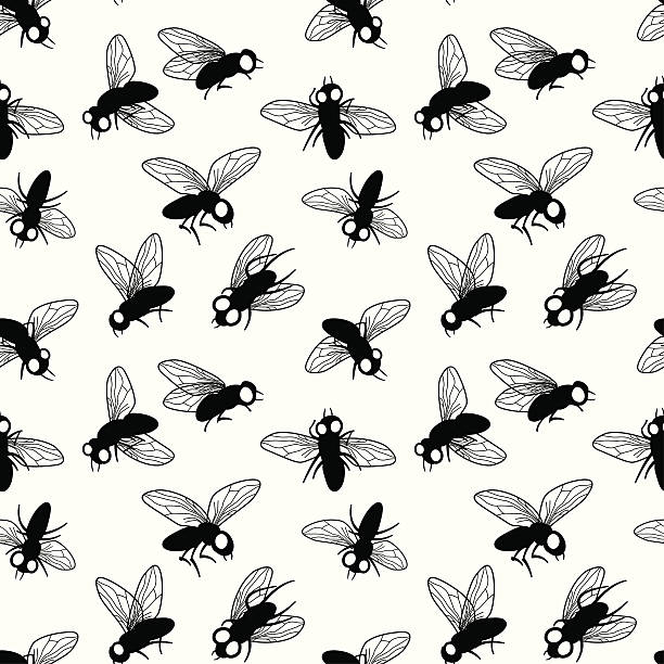 Flies  fly insect stock illustrations