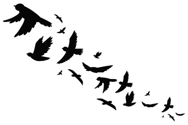 Flock of bird migration black silhouette in flying. Vector illustration isolated on white background. Flock of bird migration silhouette vector icon set. autumn silhouettes stock illustrations