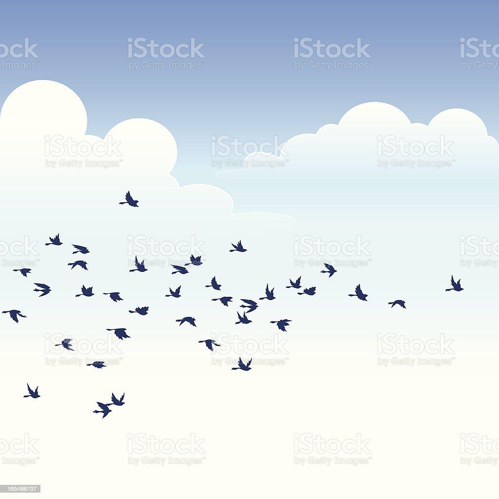 Stado ptaków - Grafika wektorowa royalty-free (Bezchmurne niebo)