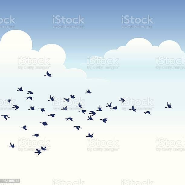 Flock of birds vector id165488737?b=1&k=6&m=165488737&s=612x612&h=5rgvp32vpoknjpi7eguleyv h1cpxl5dymgvnqrfi o=