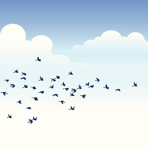 flock of birds - birds stock illustrations