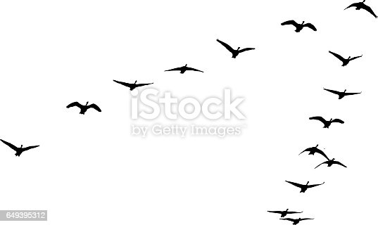 istock Flock of Canada Geese flying in formation 649395312