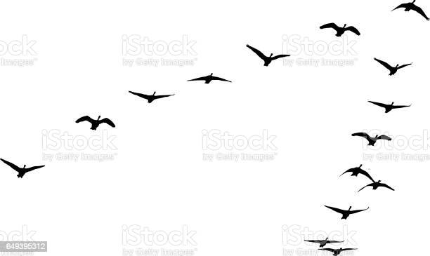 Flock of canada geese flying in formation vector id649395312?b=1&k=6&m=649395312&s=612x612&h=ydqhatcn64qqc9zifbe4pkfpdy0v1rb9 tjkt4rvyks=